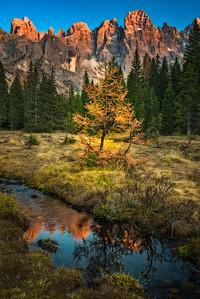 A lone larch, Val Venegia