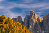 Odle range and golden larches