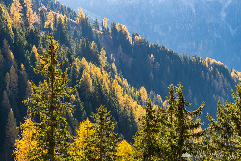 Fall colors in the Dolomites