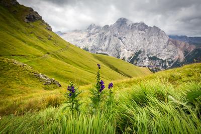 Flora in Dolomites