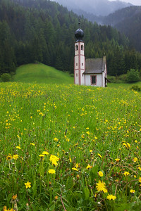 Yellow Flowers, Dolomite Church in Val di Funes, Dolomites, Italy