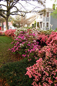 Springtime in Savannah - On Tuesday, March 13, we pulled into Savannah. The temperature would venture into the 80s later in the day - warm even for the South in mid March.  The azaleas were in full splendor.
