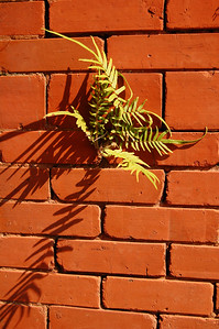 ...and judging from the wild air ferns growing on the bricks of some buildings, it's not difficult to set down roots in Savannah.
