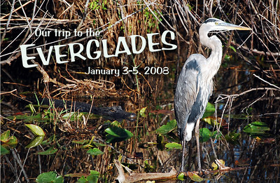 The first days of 2008 found us in the Everglades, a 1.5 million acre mosaic of sawgrass, flatlands, most-draped cypress groves, mangrove islands, birds...and oh yes, alligators.