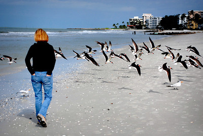 We continued our walk, along the way disturbing a flock of oystercatchers that had gathered along the shoreline....