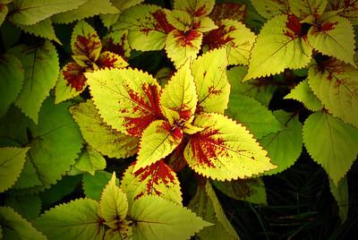 More vivid display of the garden's color.