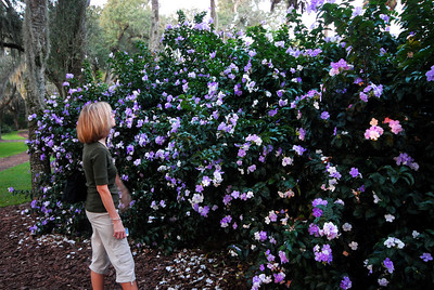 "The gardens themselves are 250 acres of ferns, palms, oaks and pines.  The brochure told us there was a ""thousand shades of green,"" but what caught our eye were the bursts of color from azaleas, camellias and other blooming plants."