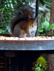 ...a squirrel munching its dinner.