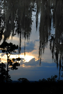 ...and observe a Florida sunset through the dripping strands of Spanish moss.