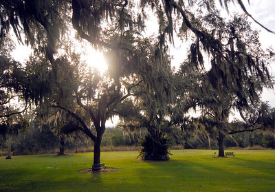 The long strands of gray Spanish moss seemed to glow silver against the long shadows of the setting sun...
