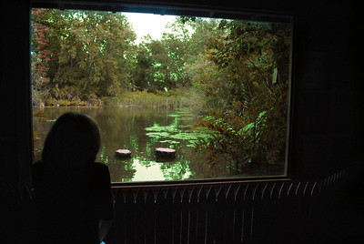 """...native birds we could observe from the """"Window By The Pond,"""" a small, secluded observation hut...."""