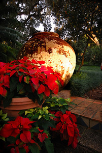 Poinsettias had been placed around giant urns along one of the paths.