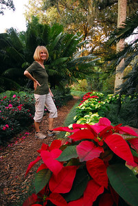 Being the holiday season, some of the garden's paths were lined with poinsettias.