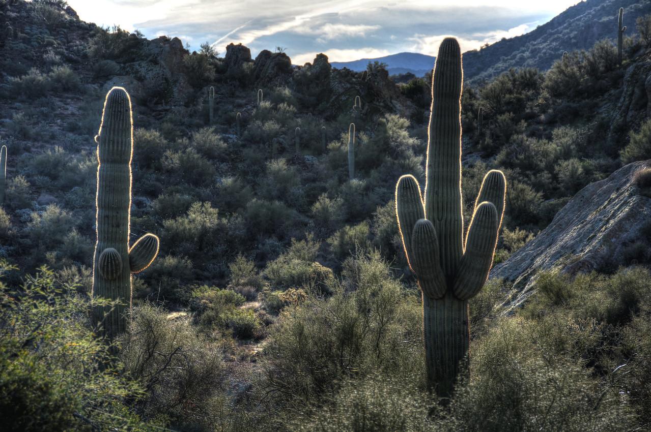 "The Saguaro cacti offer excellent displays of ""rim lighting""..."