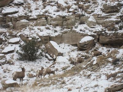 Dominguez-Escalante Canyon, CO - 1/4/2015