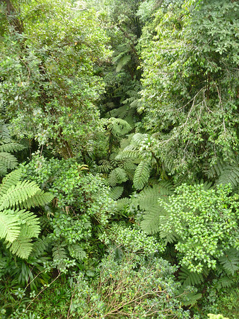 Dominica 2011