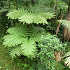Fern fronds are about 10 feet long