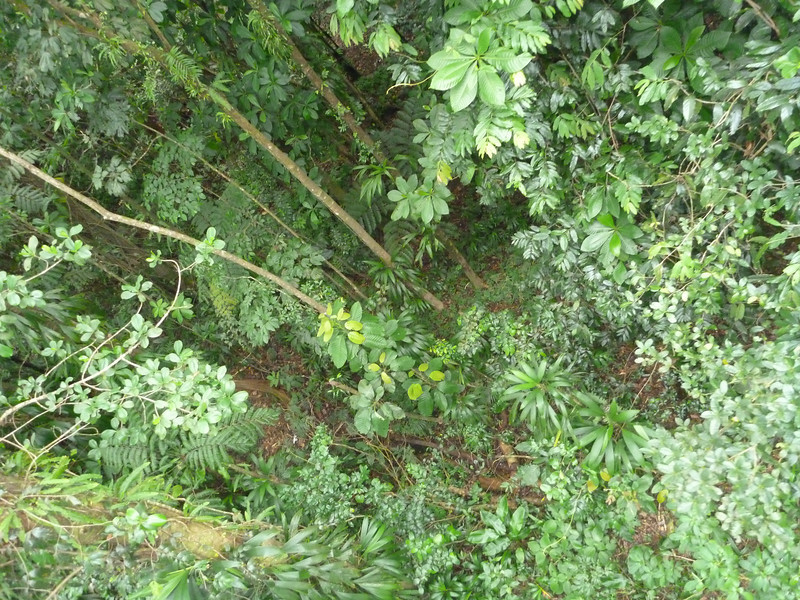 About 60 feet up, coming back down the mountain through the canopy. The guide was articulate, very knowledgable and helpful.