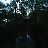 Rio San Juan mangrove forest Laguna Grigri, Rio San