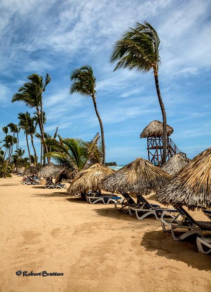 Wind Blown Palms on the Beach