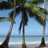 Coconut palms line the stretch of beach known as Playa Bonita.