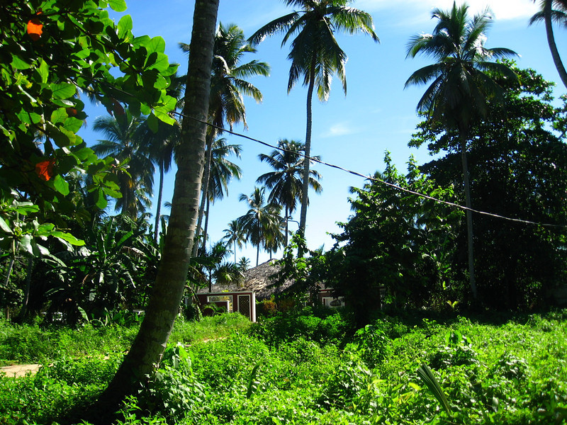 This was the view from the gates to house, looking across the street (a dirt road) over to the Hotel Oasis. We were literally in the jungle.