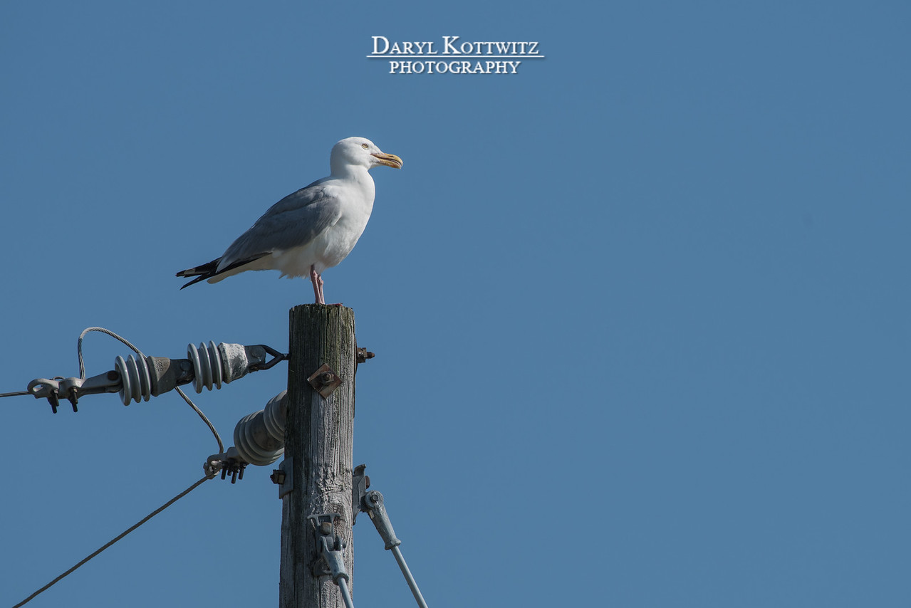 Power to the Gull