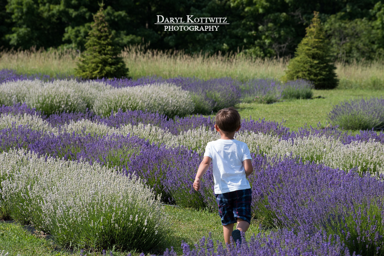 Lavender Fun