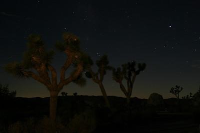 Joshua Trees by Moonlight. Joshua Tree National Park, CA.