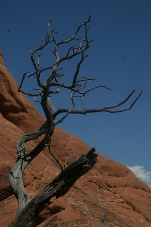 It wouldn't be my album if I didn't include at least one dead tree shot. Arches National Park, Utah.