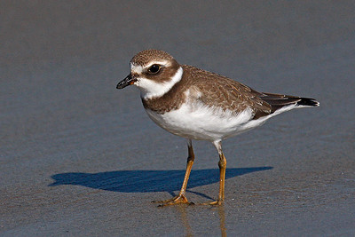 Plover - Me And My Shadow