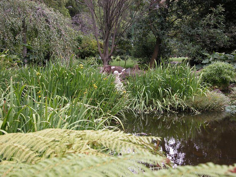 Fitzroy Gardens, near Cook's cottage