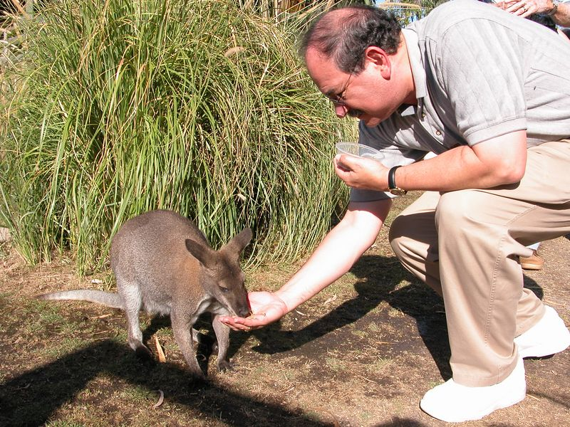 Mal feeding a Wallaby