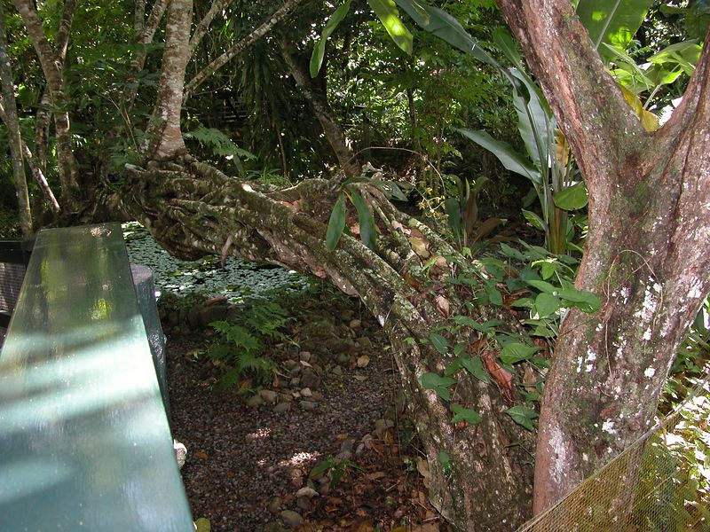 At the Eco Park in Fiji.