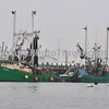 Fishing Fleet, Rockland, ME