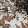 Sealife of ME: Scallops, oysters, starfish (seastars), lobster