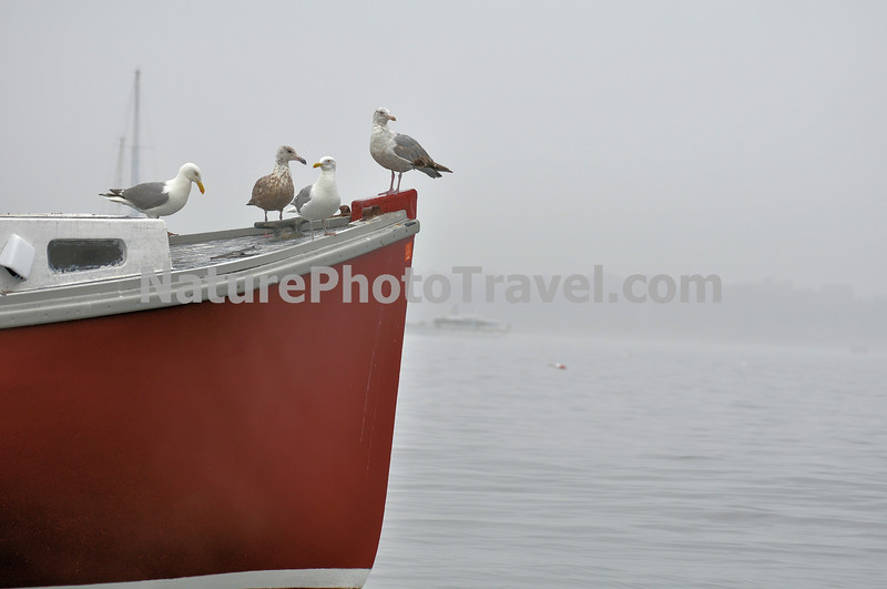 Souls of Departed Sailors (Gulls on Bow).