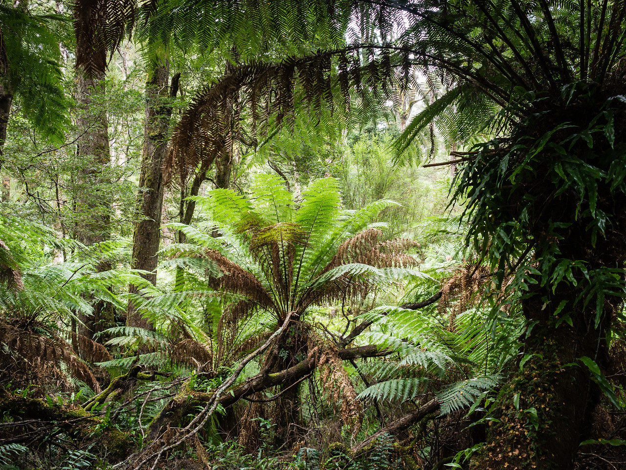 Rainforest, South Australia