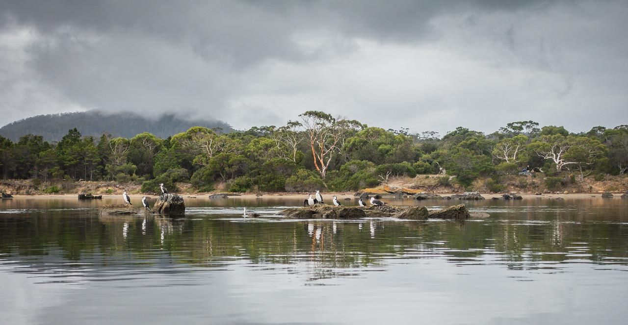 Cormorants, Pelican Bay, Tasmania