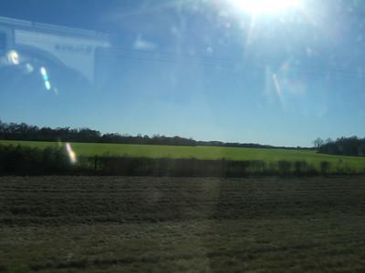 Bright green field in Mississippi