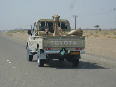 Mother and baby camel on the Al Ain-Dubai road.