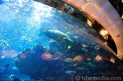 Tango DIva in Dubai 1-31-09  17