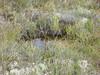 little bog pool