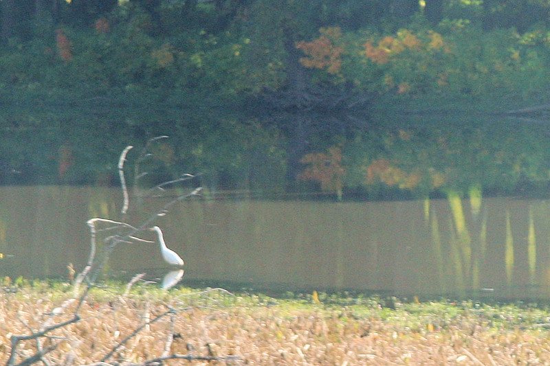 Still driving across the Mississippi at Sabula. We saw a lot of these herons or cranes by the road.