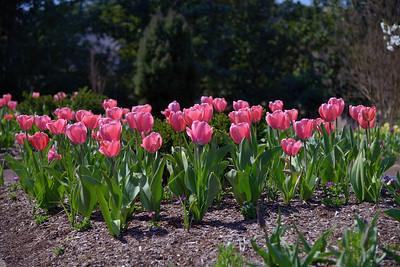 Duke Gardens 7 April 2013