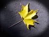 A leaf near Enger tower
