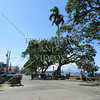The Boulevard by the ocean in Dumaguete, Negros Oriental, Philippines.