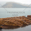 Timber logs await for cargo ship loading at Port of Otago in Dunedin, New Zealand.