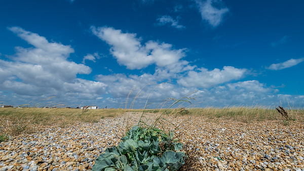 The shingle beach of Dungeness. Miles and miles of pebbles and some small plants finding life out of it. It was a hot day, sunny and clear sky.