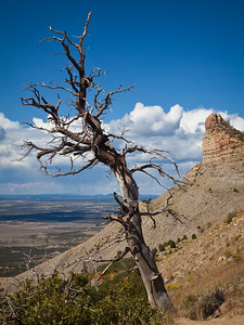 """Design: diagonal lines are dynamic. Lone Tree, Montezuma Valley Overlook, Mesa Verde. Fine art print available, matted and framed, 22""""x28"""""""